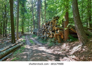 Woodpile of freshly harvested beech logs on a forest road under sunny skies in the Slovenskia forest. Trunks of trees cut and stacked in the foreground, forest in the background.