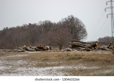 woodpile laying down on the snowy ground in winter on the grassfield with forest trees in the background