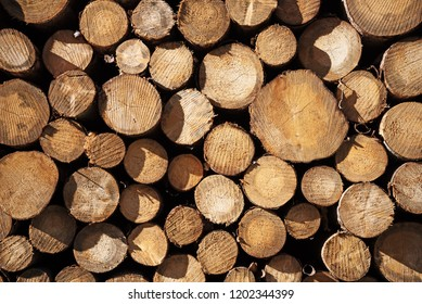 woodpile with logs of tree trunks, background texture