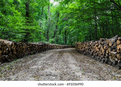 Woodpile road in the forest