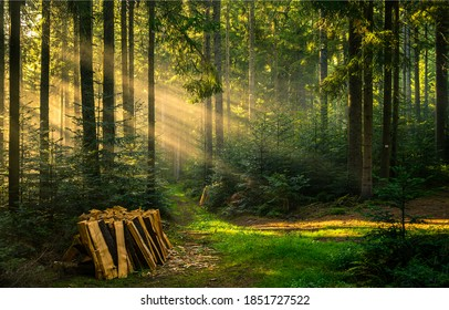 Woodpile stack in forest sunbeams. Forest sunbeams woodpile. Forest sunbeams stack. Forest sunbeams view