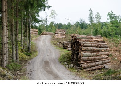 Woodpiles by a winding country roadside in a spruce tree forest