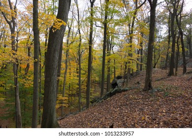 The woods in autumn. Golden leaves on maple and birch trees. Rock formations in the background.
