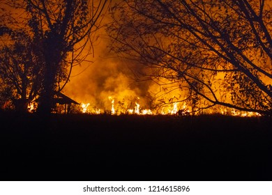 In the woods are burning. fire in the forest is very scary