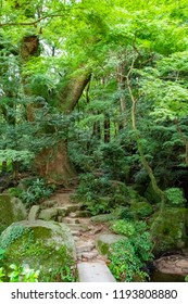 The woods of Dazaifu Tenmangu, Japanese famous shrine located in Dazaifu city, Fukuoka pref, Kyushu