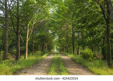 Woods dirt road