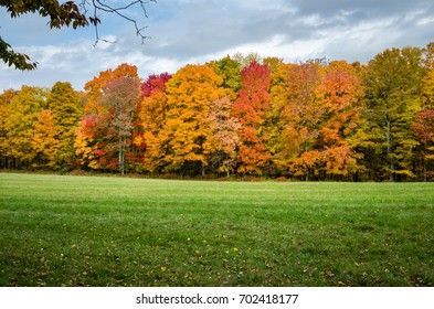 Woods at the Edge of a Meadow in Autumn. Gorgeous Fall Foliage and Cloudy Sky