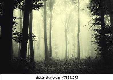 woods in fog background