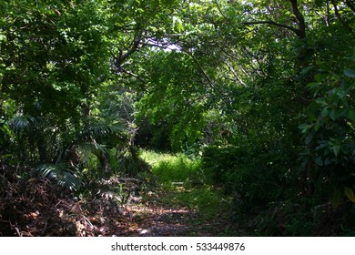 Woods in Iriomote