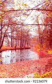 Woods Landscape Autumn Leaves