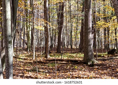 The woods in New York state