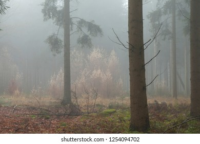 Woods on a foggy fall day