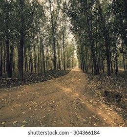 Woods road background