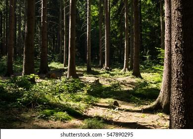 Woods. Slovakia