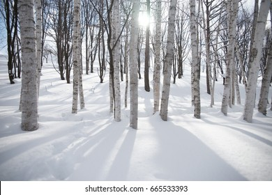 woods in winter