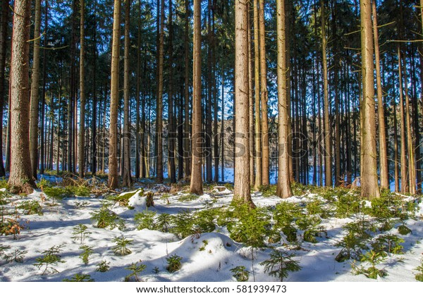 Woods in winter.