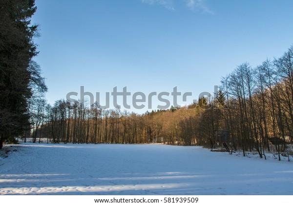 Woods in winter.