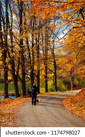 Woodstock, VT, USA October 10, 2012 An adult man walks his dog along a country road in autumn near Woodstock, Vermont
