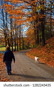 Woodstock, VT, USA October 10, 2012 An adult woman takes her dog for a walk on an autumn day near Woodstock, Vermont