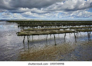 Woodstown Beach, Waterford, Ireland. lines of Oyster bed and seafood farm on the beach. Bed lines where they are grown and collected.