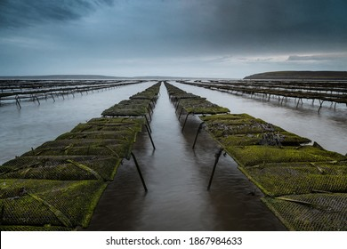 Woodstown Beach, Waterford, Ireland. Oyster and shellfish farm on the beach. Lines of beds where they are grown and collected. Nice sky and clouds on the horizon.