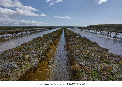 Woodstown Beach, Waterford, Ireland. some Oyster and seafood farm on the beach. Bed lines where they are grown and collected.