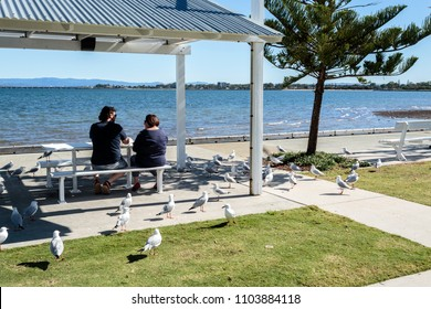 WOODY POINT, AUSTRALIA – May 31, 2018:  People and seagulls sharing lunch on a perfect sunny winter day, facing Bramble Bay in Woody Point