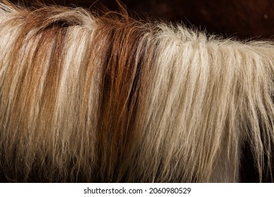 Wool, close up of horsehair for background