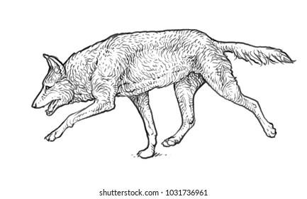 Woolf sketch image