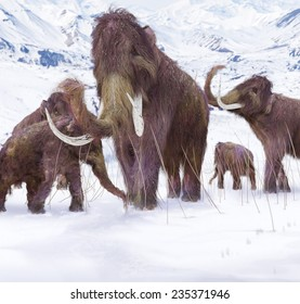 Woolly Mammoth Family - An illustration of a family of Woolly Mammoths grazing on what is left of the grasses as winter approaches in this ice age scene.