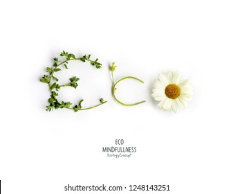 Word Eco made of green leaves, branches and flowers, isolated on white background. Ecology and Environmentally friendly planet Concept. Nature speaking Think Green. Flat lay.Top view.