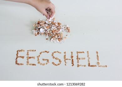 word of eggshell from eggshell.