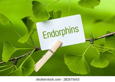 """The word """"Endorphins"""" in a Ginkgo Tree"""