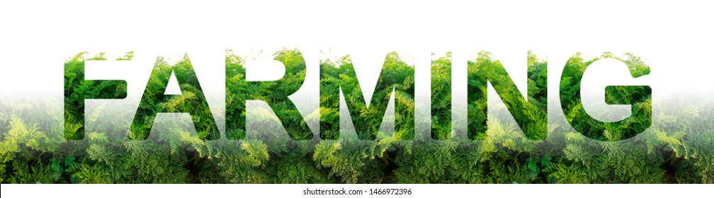 The word Farming on the background of a carrot plantation field. Agribusiness and agro-industry. Farm Growing food for resale and processing. innovative technologies, equipment and fertilizers.