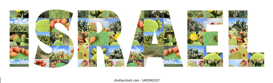 Word Israel. Banner made of photos Sabra cacti and Israel plantations. Opuntia cactus with large flat pads and red thorny edible fruits. Cactaceae. Prickly pears fruit. Sabra Fruit. Isolated on white