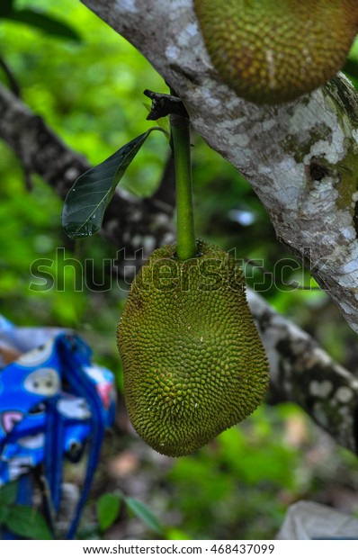 Word Jackfruit Comes Portuguese Jaca Which Stock Photo (Edit Now