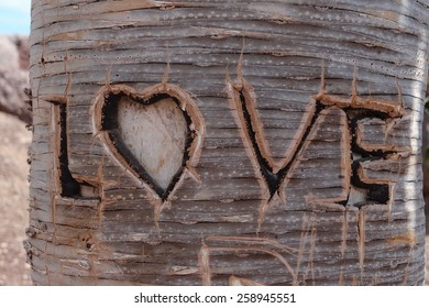 """the word """"love"""" shaped in the tree"""