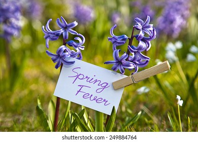 The word  Spring Fever with  hyacinths