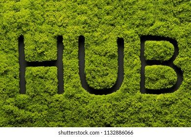 Word writing text Hub in green moss. Business concept for computer network. Background. Moss texture