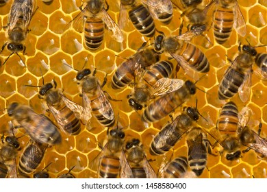 Work of bees inside hive. They convert nectar into honey.