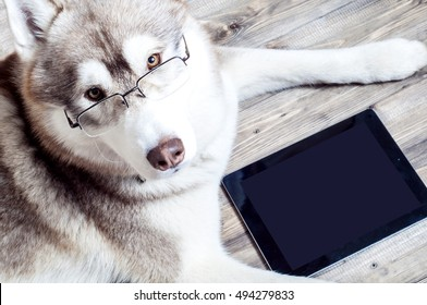 Work at the computer, Dog with computer,  dog with glasses