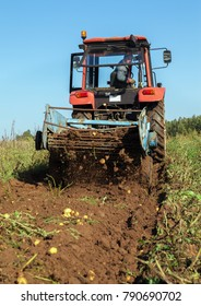 Work for digging of potatoes in a field.