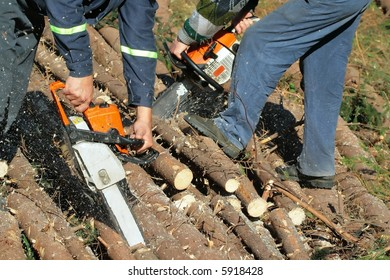 work in forest with  power saw