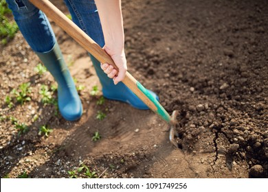 Work in a garden - Digging Spring Soil With Spading fork Close up of digging spring soil with blue shovel preparing it for new sowing season.