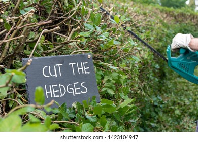 """Work in the garden. Man is cutting a hornbeam hedge. The sentence """"cut the hedges"""" is written on a slate."""
