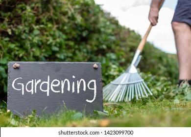 "Work in the garden. Man is raking leaves of a freshly cut hornbeam hedge. The word ""gardening"" is written on a slate."