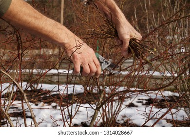 Work in the garden - pruning shrubs. The best term is the end of winter or early spring.