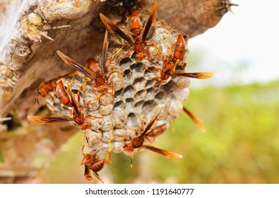 Wasp´s work on a nest. Very strong concept for solo working and danger symbols. Blurred waps with focus on nest.