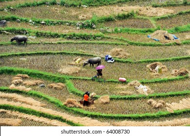 Work on the rice field