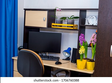 work space at home. computer table, wardrobe, blue curtains and natural decor - orchid flowers and hyacinths.